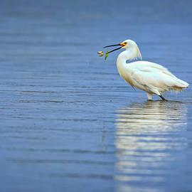 Snowy Egret at Dinner - Rick Berk