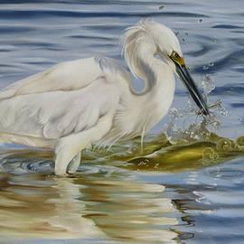 Phyllis Beiser - Snowy Egret Hunting Shrimp