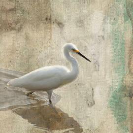 Rosalie Scanlon - Snowy Egret in Grunge