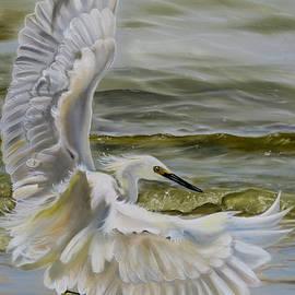 Phyllis Beiser - Snowy Egret Landing On The Shore
