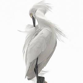 Ernie Echols - Snowy Egret Preening 2