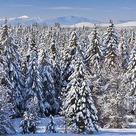 Alan L Graham - Snowy Evergreen Forest