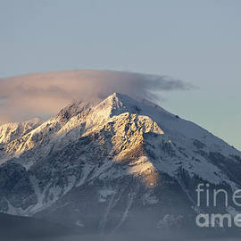 Wildlife Fine Art - Snowy Mountain Mist
