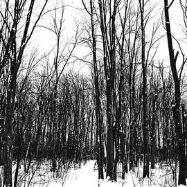 Debbie Oppermann - Snowy Trail Through The Woods