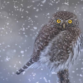 Joy McAdams - Night Owl