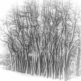 Cathy Kovarik - Snowy Wood