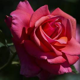 Saija  Lehtonen - So Red the Rose