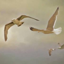 Hal Halli - Flying