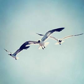 Trish Mistric - Soaring Seagulls