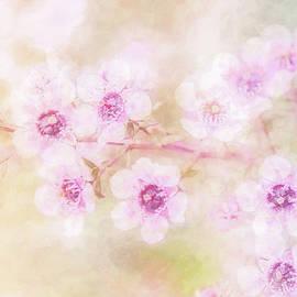 Terry Davis - Soft and Abundant