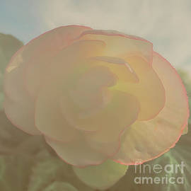 Luther Fine Art - Soft and  Sweet Begonias