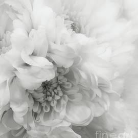 Arlene Carmel - Soft Dahlia White