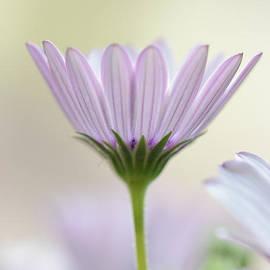 Sven Pfeiffer - Soft flower