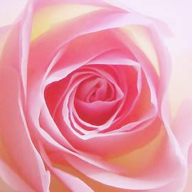 Johanna Hurmerinta - Soft Glowing Rose