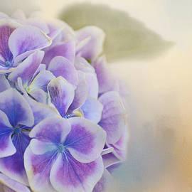 Lynn Bauer - Soft Hydrangeas on Peach