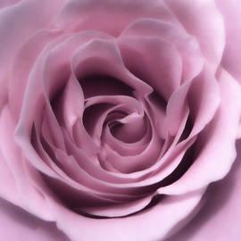Johanna Hurmerinta - Soft Pink Beauty 2
