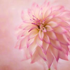 Mary Jo Allen - Soft Pink Glow
