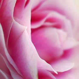 Alison Burford - Soft Pink Rose