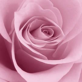 Johanna Hurmerinta - Soft Pink Rose Macro