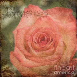 Janice Rae Pariza - Soft Rose