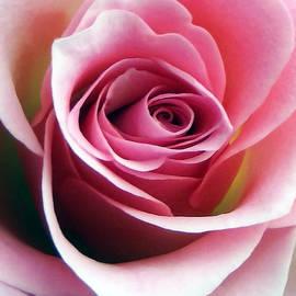 Johanna Hurmerinta - Soft Rose Macro 4