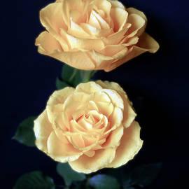Johanna Hurmerinta - Soft Roses