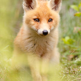 Roeselien Raimond - SoftFox