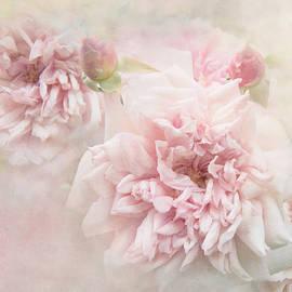 Teresa Pople - Softly Roses