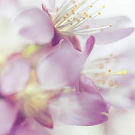 Jenny Rainbow - Softly Spoken. Spring Sakura Blossom