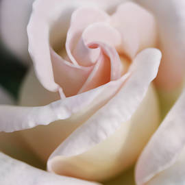 Jennie Marie Schell - Softness of a Pastel Pink Rose Flower