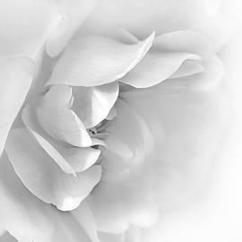 Jennie Marie Schell - Softness of Gray Rose Petals