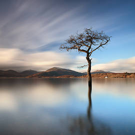Grant Glendinning - Solitary Tree