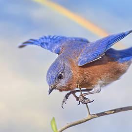 Bonnie Barry - Somewhere over the Rainbow