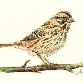 Song Sparrow - Juan  Bosco