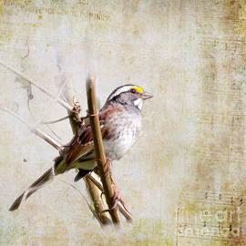 Kerri Farley - Songbirds - White-throated Sparrow