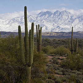 Saija Lehtonen - Sonoran Desert Snow Day
