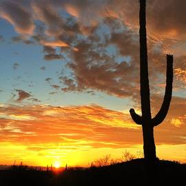 Erin Redding - Sonoran Desert Sunrise