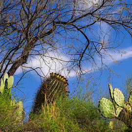 Mark Myhaver - Sonoran Warmth v05