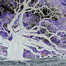 Suzanne Gaff - Soul of the Angel Oak