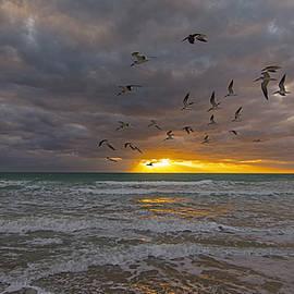 Steve Lipson - South Beach 6027