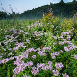 JG Coleman - South Britain Meadowlands - Wildflowers in Lush Meadow