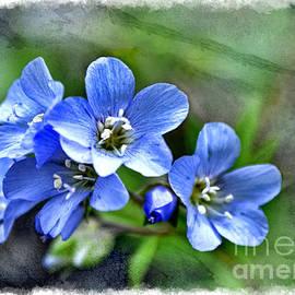 Debbie Portwood - Southern Missouri Wildflowers 5