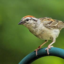 Geraldine Scull   - Sparrow