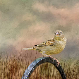 Cathy Kovarik - Sparrow in the Grass