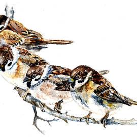 Anna Shell - Sparrows