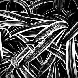 Joseph Hollingsworth - Spider Plant Intanglement