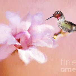 Darren Fisher - Sping Hummer