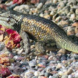 Selma Glunn - Spiny Lizard