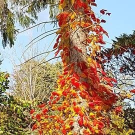 Donna Cook - Spiral Leaves