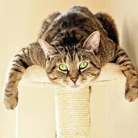 Terri Waters - Splat Cat